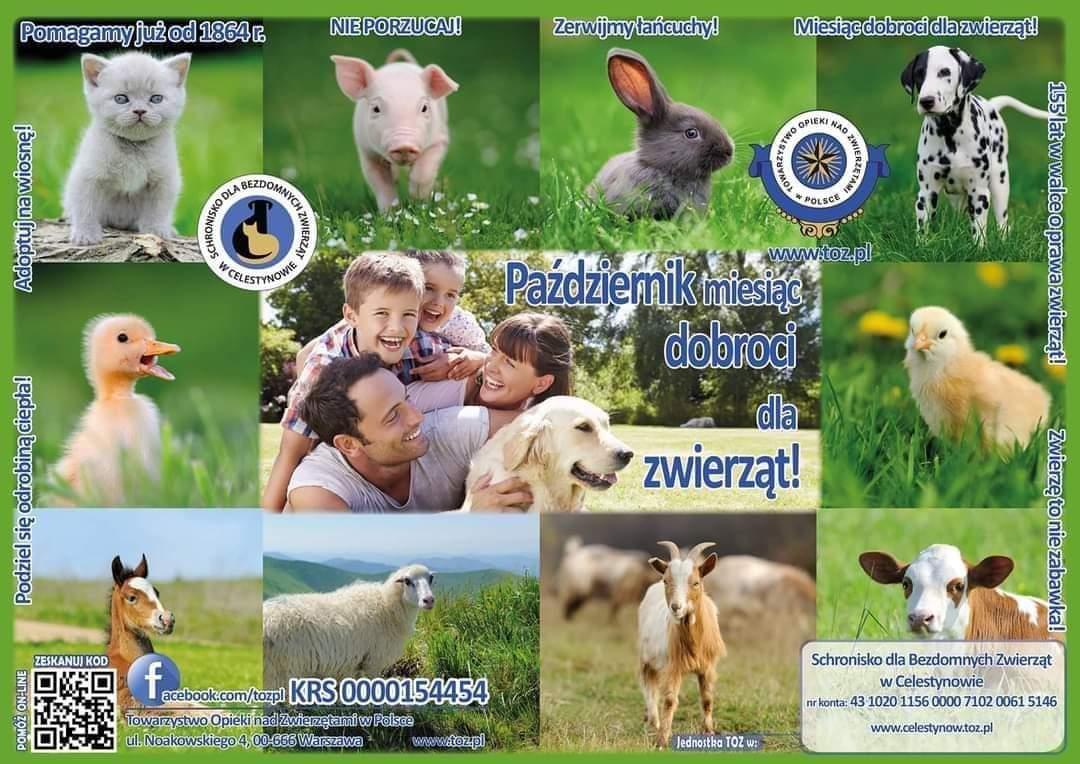 Miesiąc dobroci dla zwierząt.