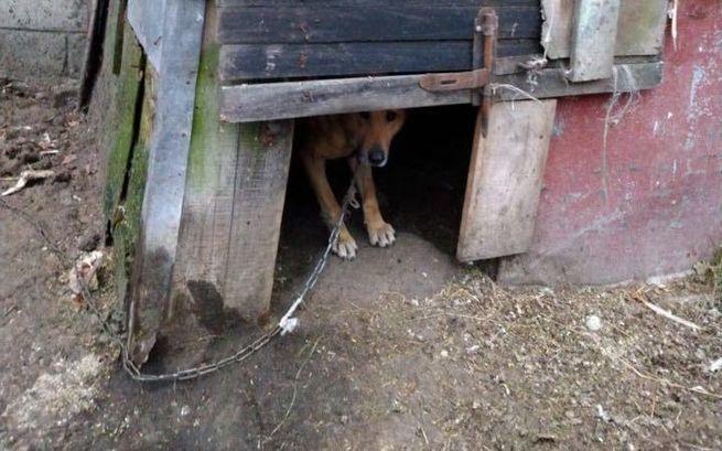 Kolejna interwencja w Pilawie - głodzone psy