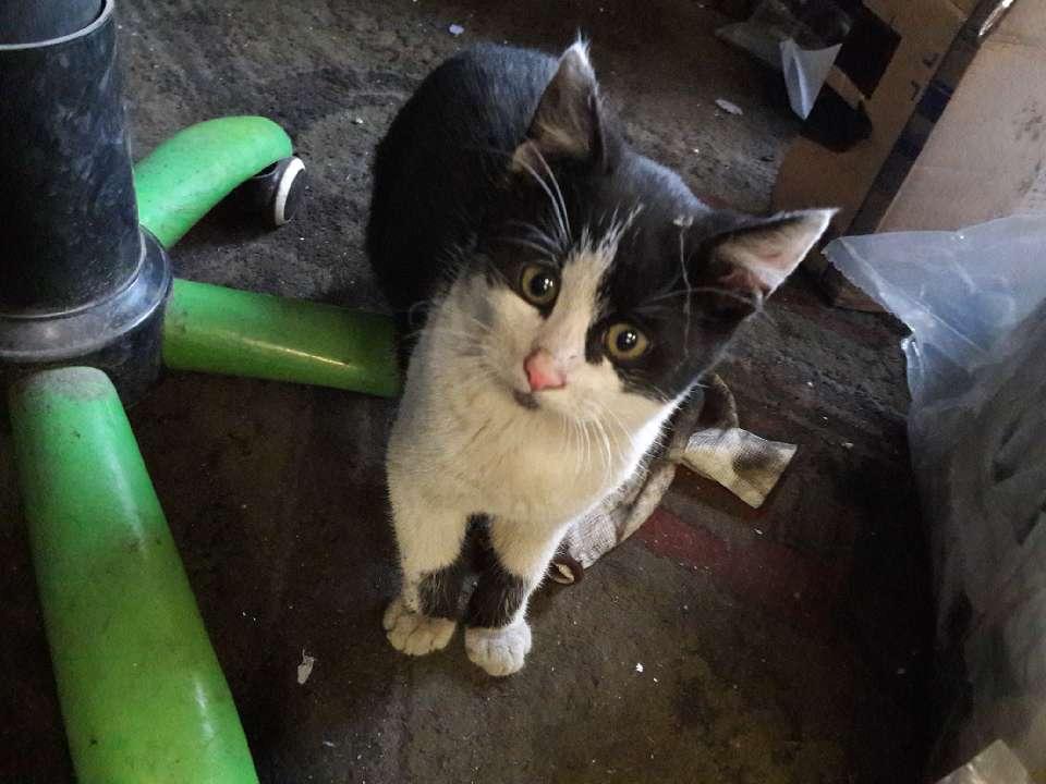 Młodziutkie kotki z warsztatu samochodowego
