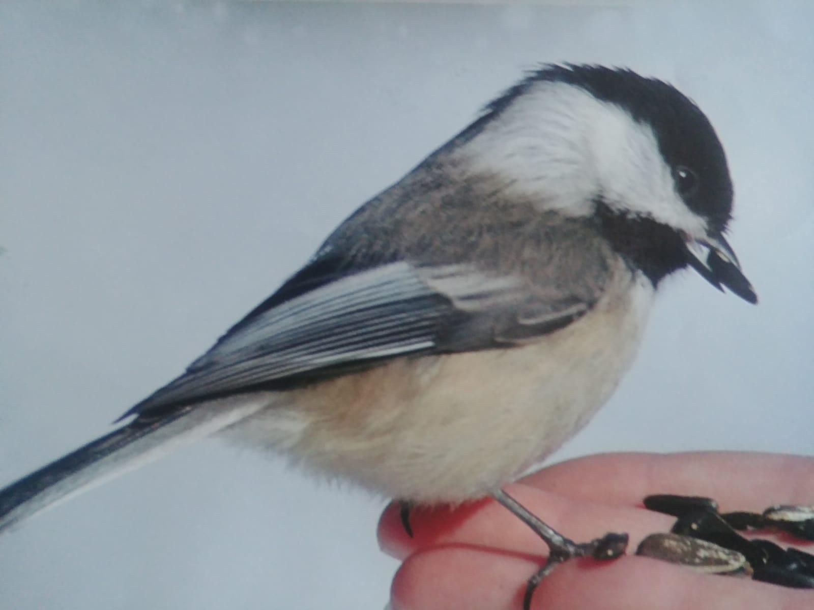 Pomóżmy ptakom w trakcie upału