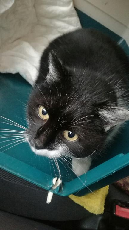 Znaleziono kotkę