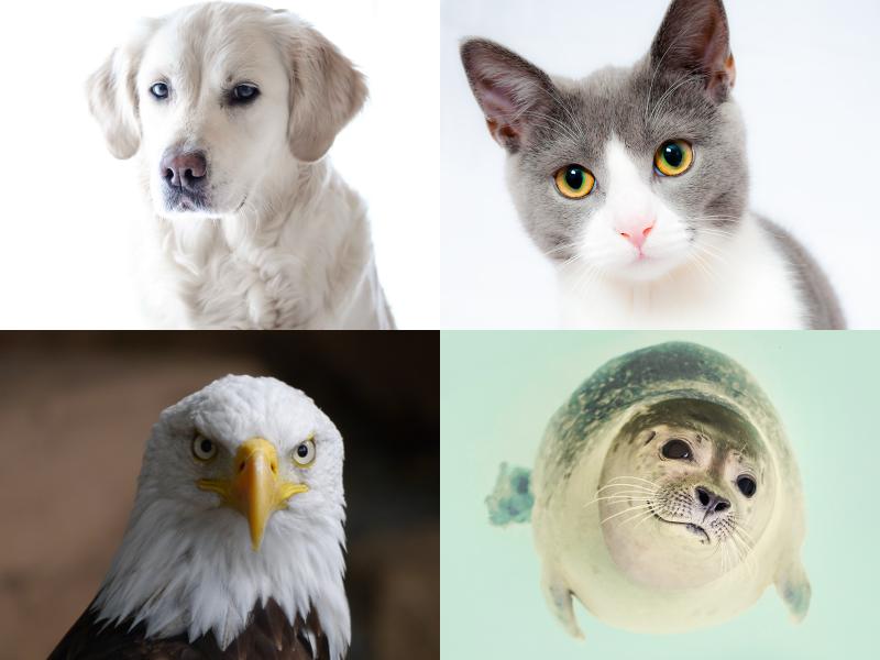 Międzynarodowy Dzień Zwierząt
