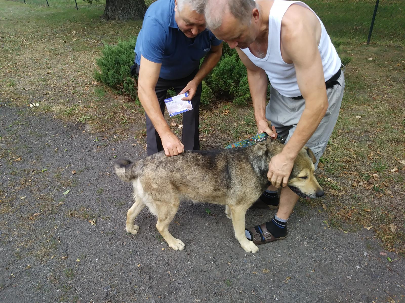 Odpchlenie psów na terenie gminy Łagów