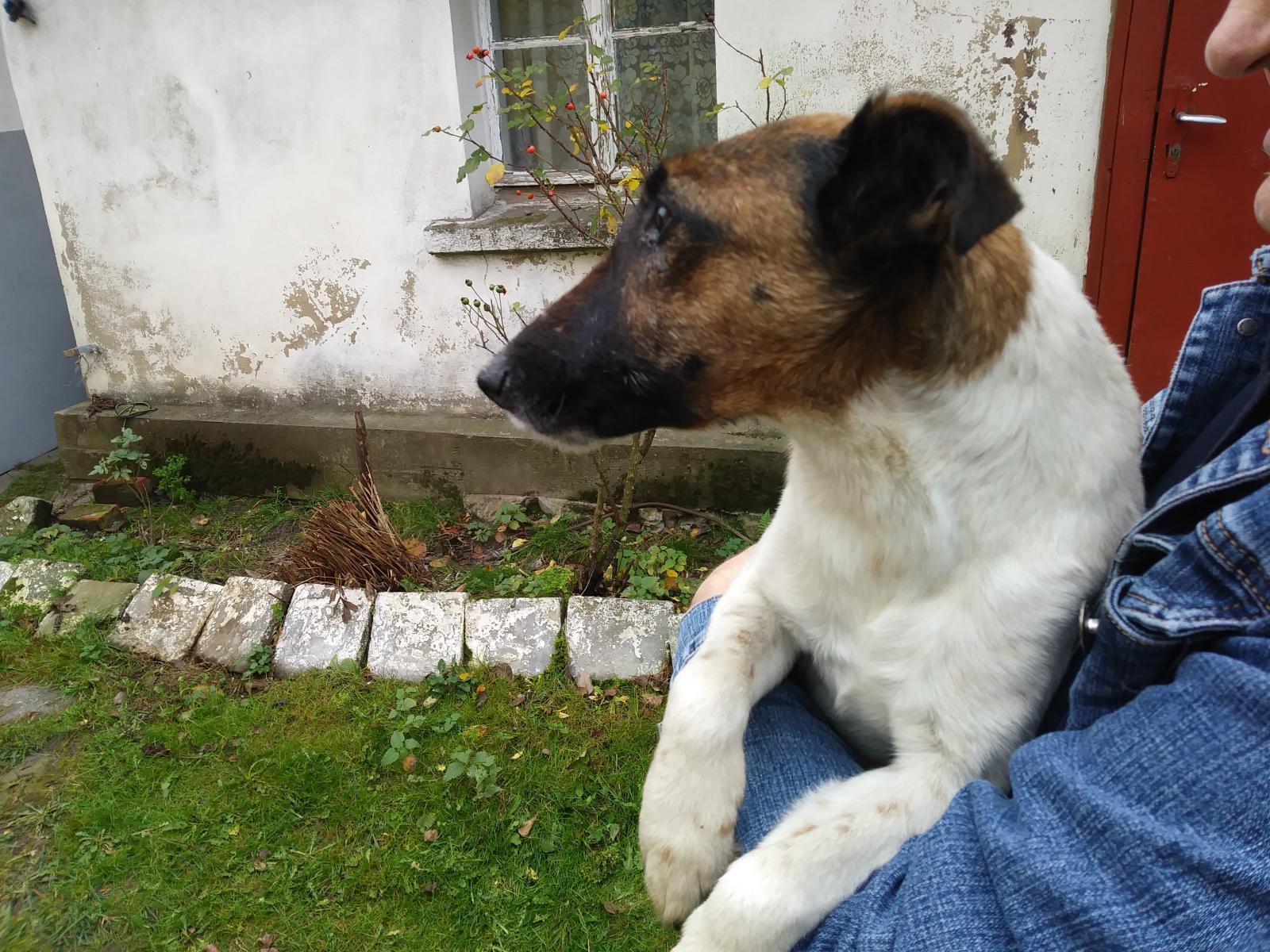 Porzucony pies w okolicy Toporowa