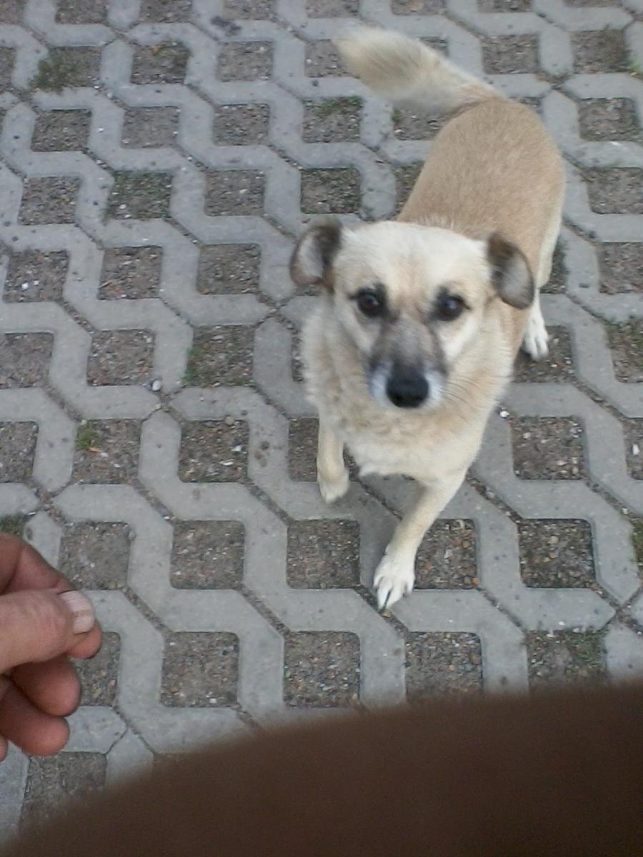 Pies odebrany za złe traktowanie czeka na adopcję