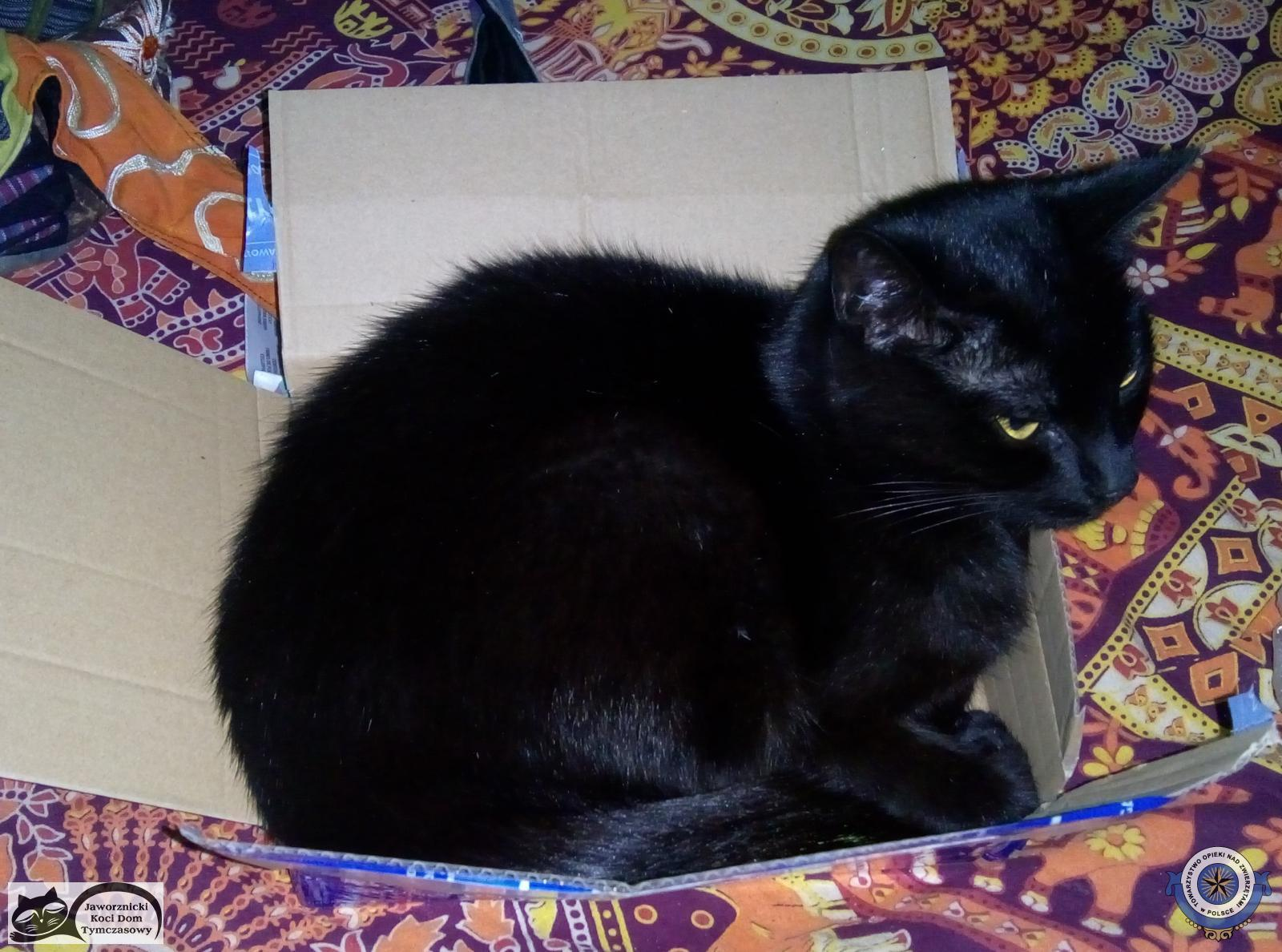Poszukiwana czarna kotka