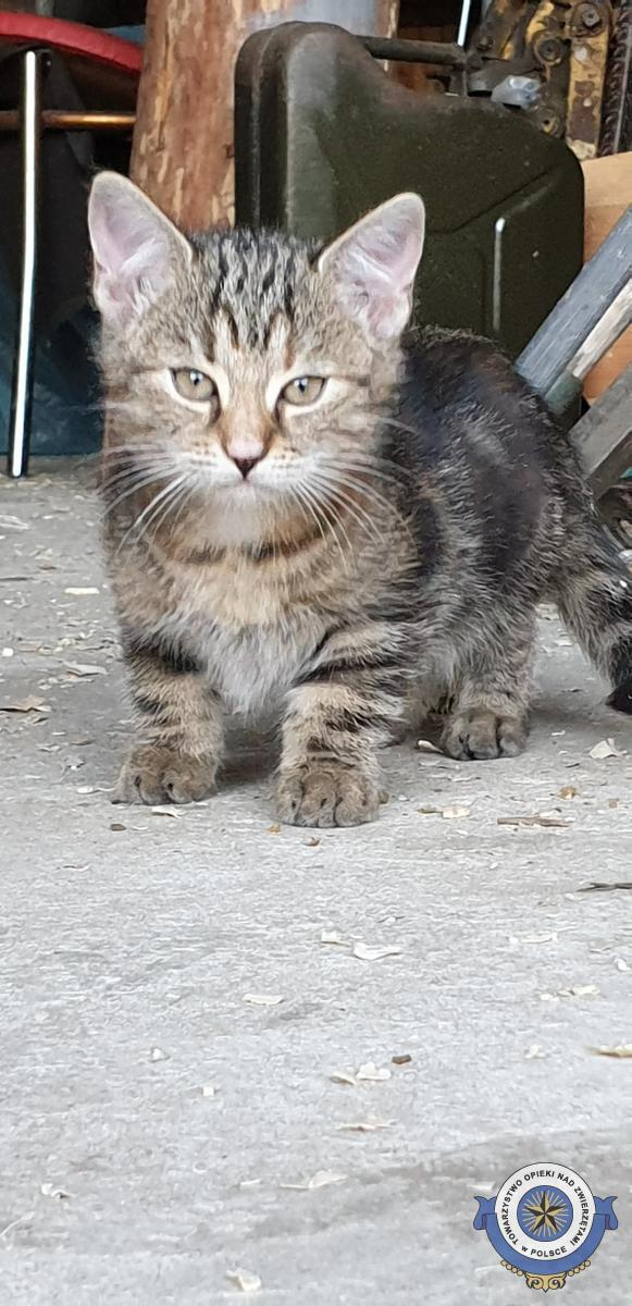 Adoptowana - Szukamy domu dla kotki