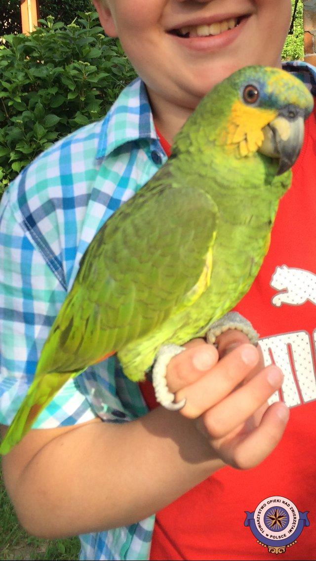 Szukamy papugi Amazonki Modrobrewej