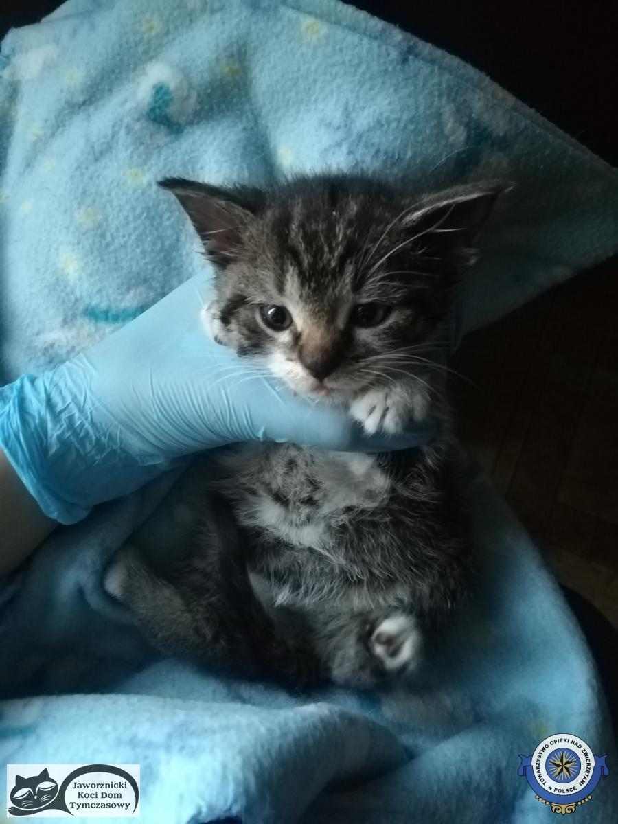 Pomóżcie w leczeniu kotów uratowanych z tuneli