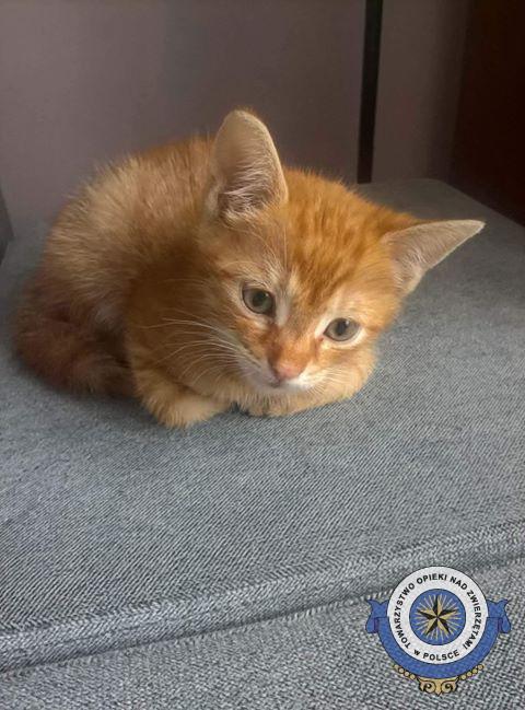 Odnaleziony - Szukamy kotka Bonusia