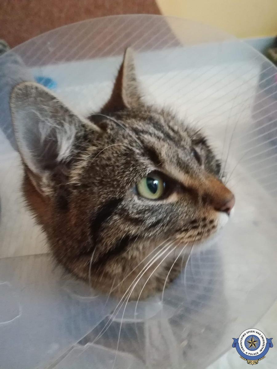 Pomóżcie w leczeniu kotki Sobelki