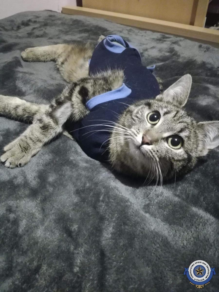 Dziękujemy za wsparcie dla kotki Sobelki
