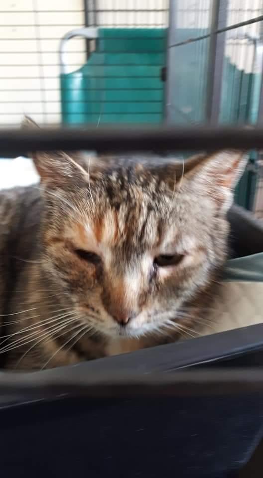 Wiejska kotka z Rytra pod naszą opieką.