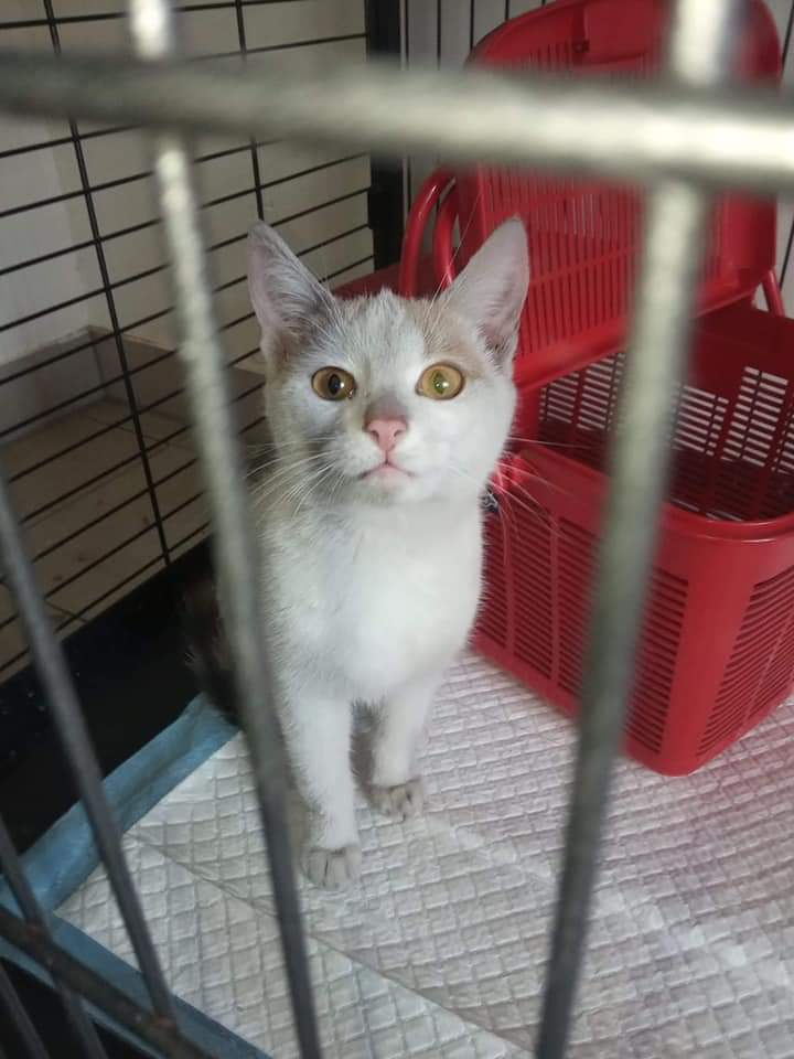 UWAGA! Uciekła adoptowana od nas kotka.
