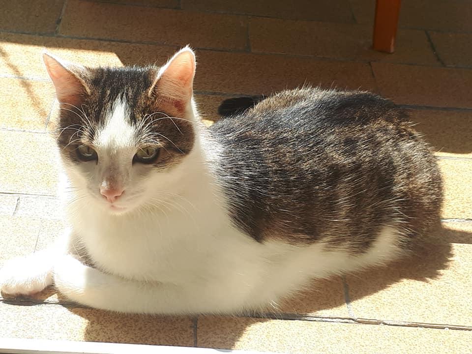 KIWACZEK cudny kotek do adopcji