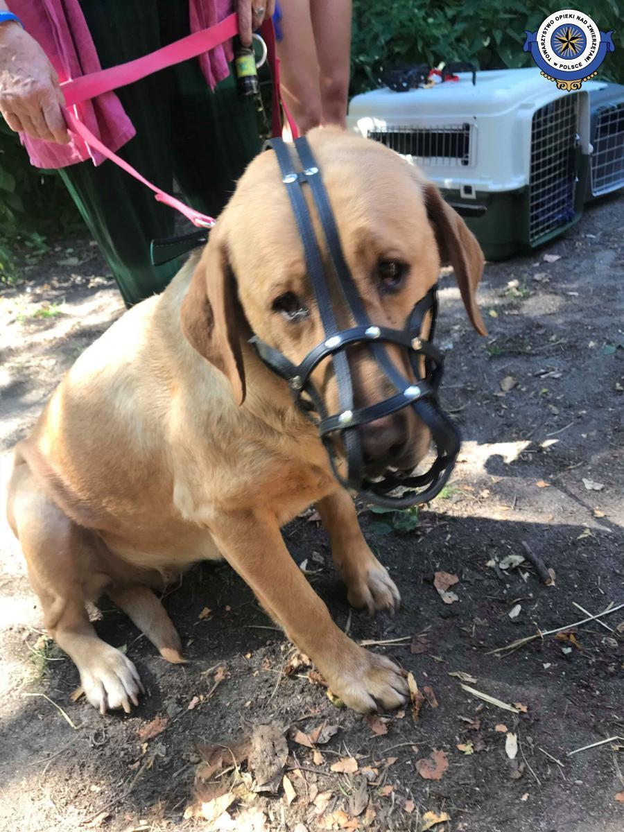 Prokuratura postawiła zarzuty znęcania się nad zwierzętami ze szczególnym okrucieństwem Ewie S. oraz Mirosławowi K.
