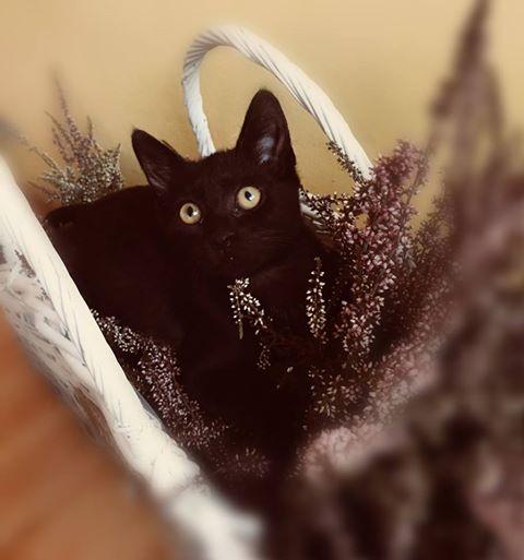 Koty z Warszawskiej - czarny