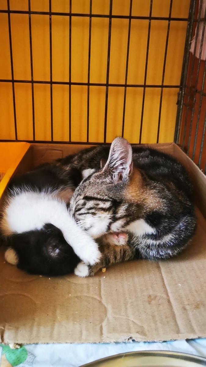 Dwie młode koteczki