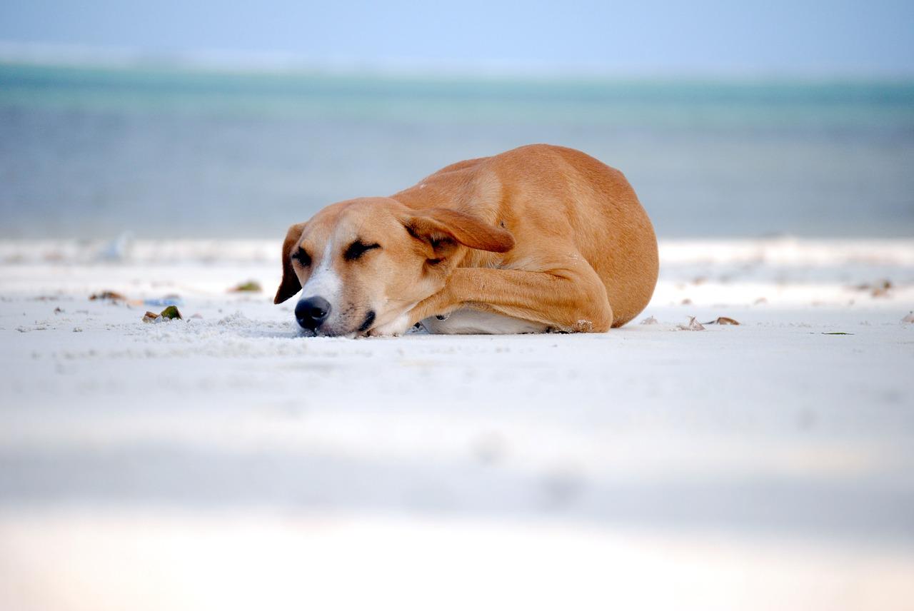 Co zrobić ze zwierzęciem w czasie urlopu
