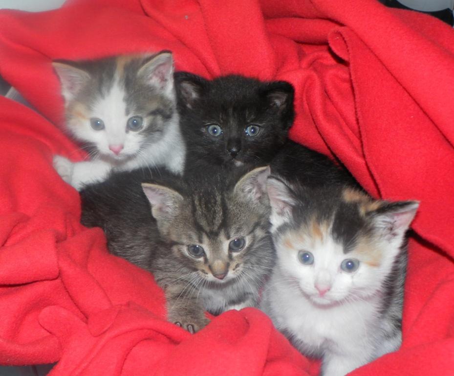 Kolorowe kocięta do adopcji!