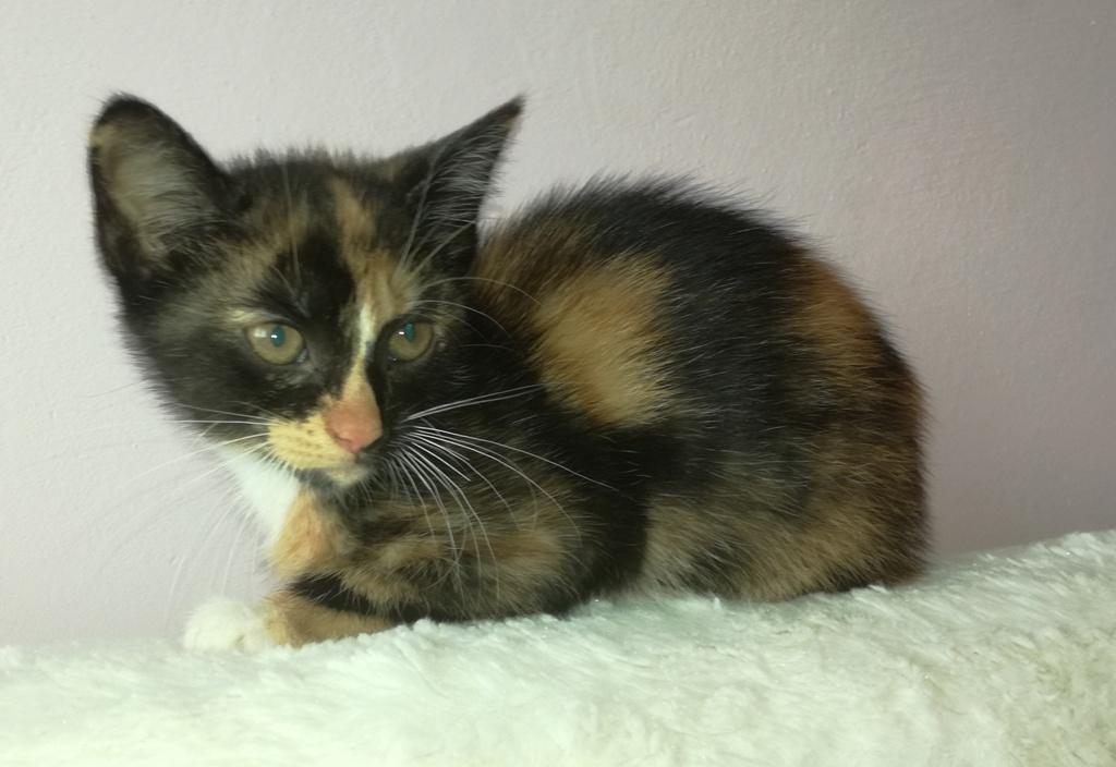 Angie - kotka,  trzy miesiące