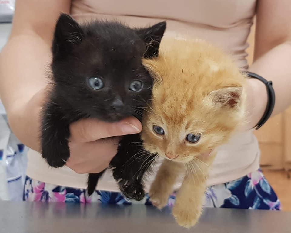 Kolorowe kociaki