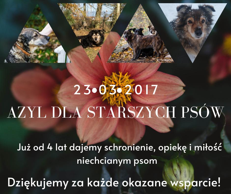 4 lata Azylu dla starszych psów w Mikołajewie