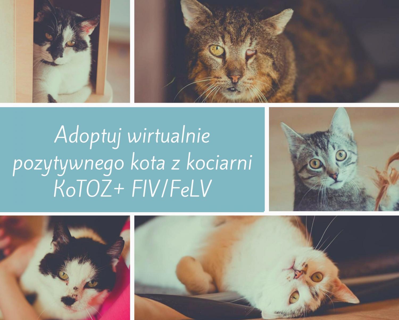 Wirtualna adopcja kota z plusem