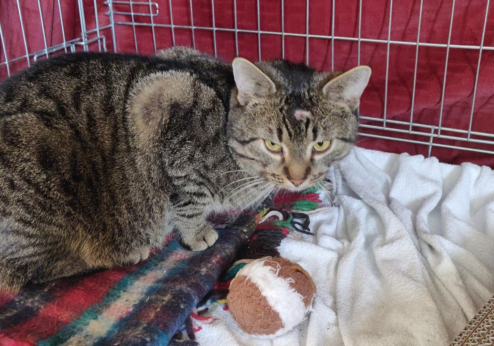 Ktoś w Suwałkach strzela do kotów z wiatrówki - uważajcie na siebie i na swoje zwierzęta!!!