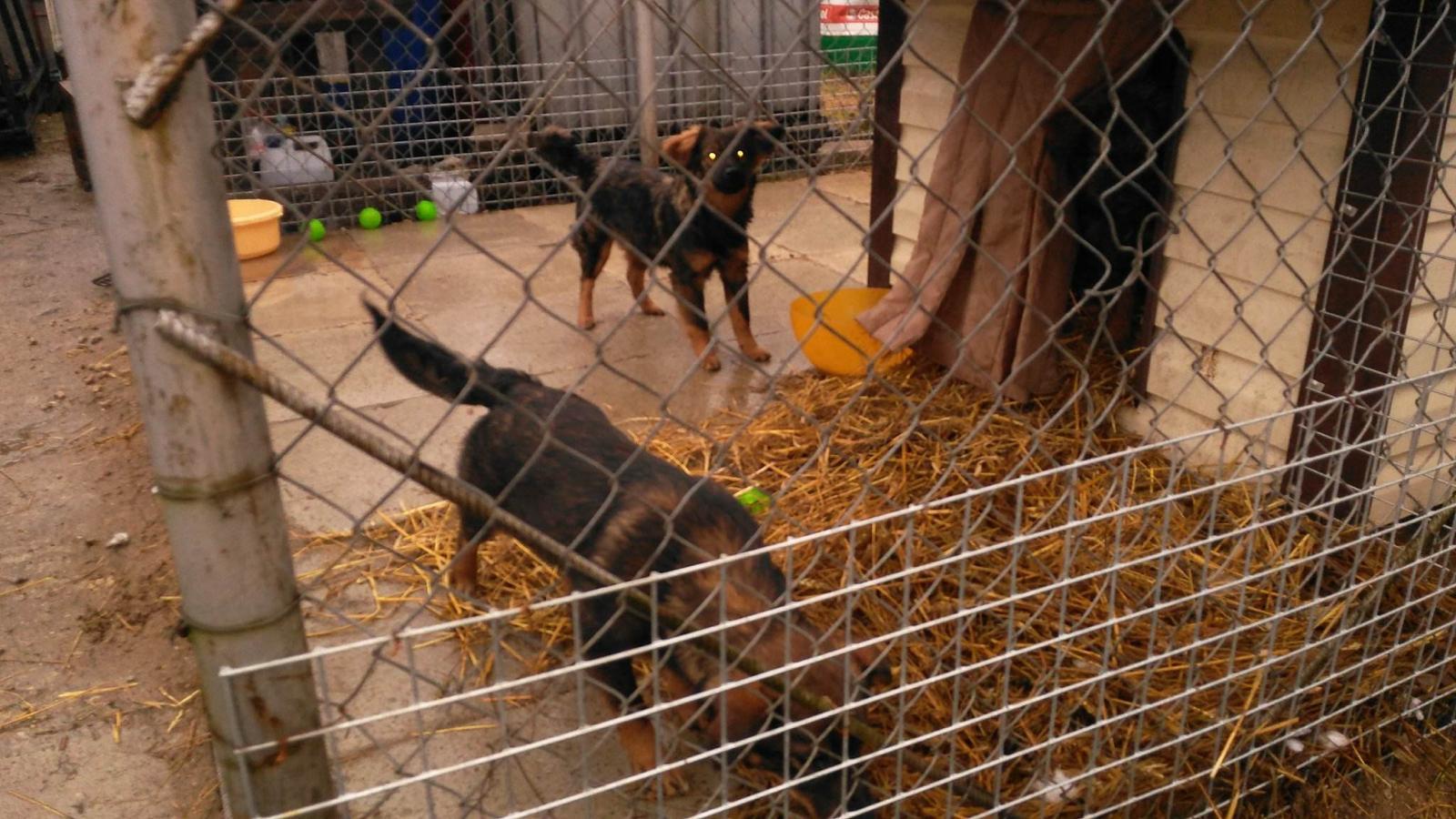 Interwencyjny kojec w Suwałkach dla psów wyrzuconych, niechcianych