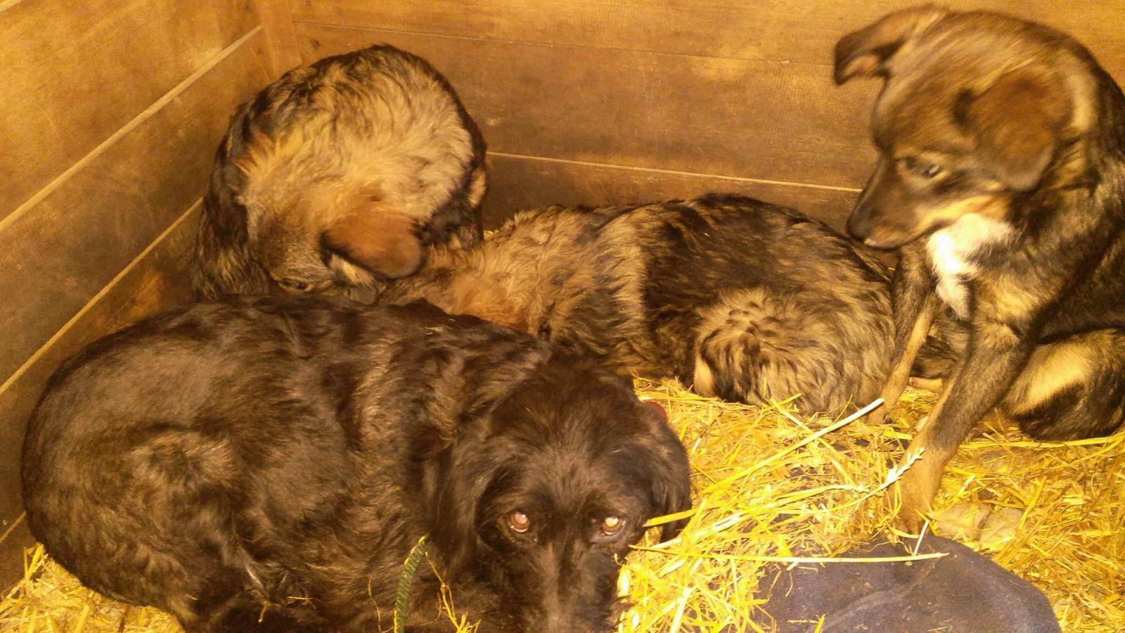 Biedna, przerażona rodzinka psów - szukamy im domów