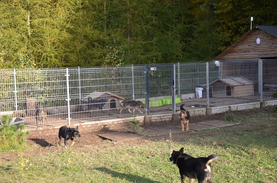 Azyl - schronienie dla najbardziej wycofanych psów ze schroniska i wyrzucanych w pudłach szczeniaków