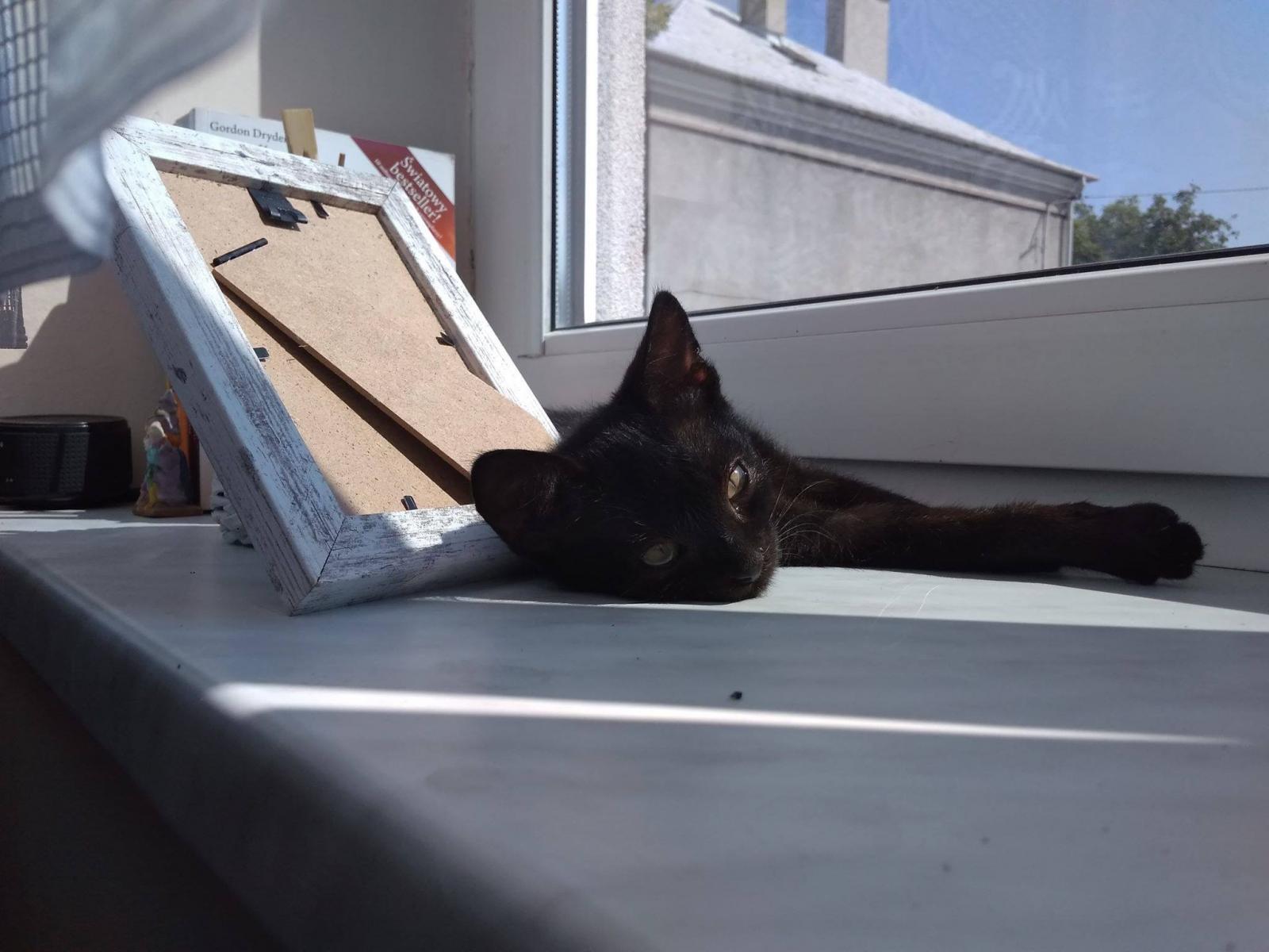 Puma w nowym domu