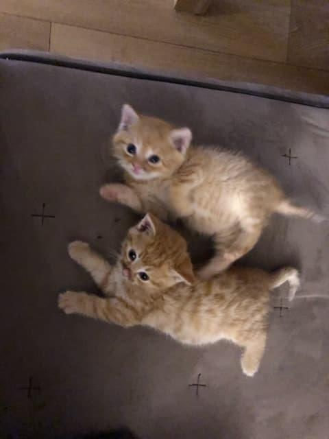 Kocie maluszki