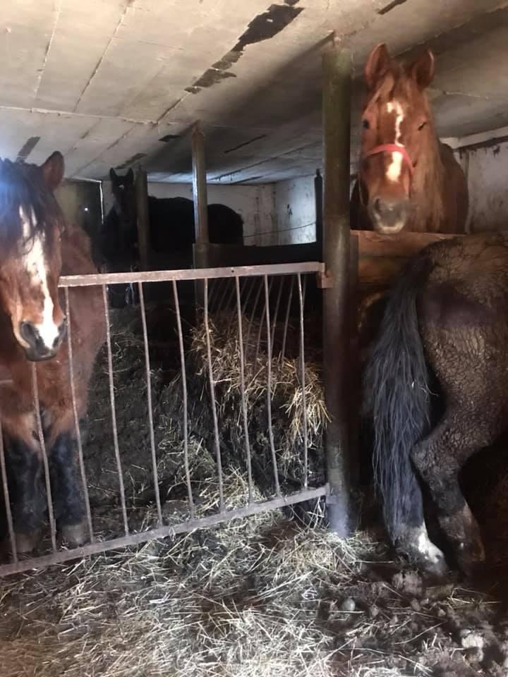 Konie dotacyjne