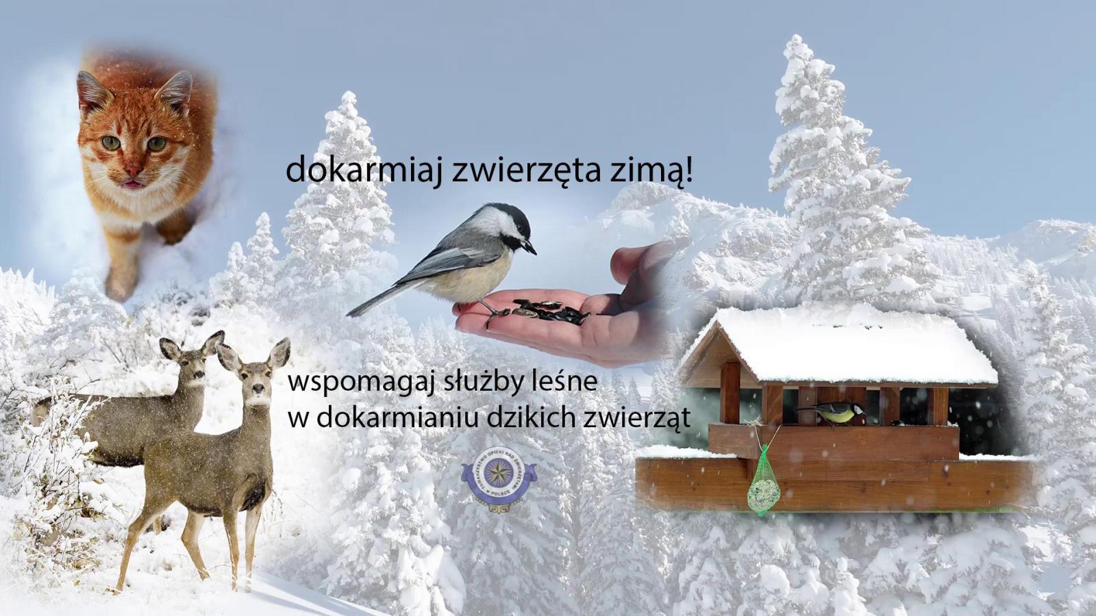 pomóż zwierzętom przetrwać zimę