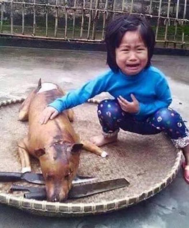 Apel o zaprzestanie organizacji festiwalu psiego mięsa w mieście Yulin w Chinach