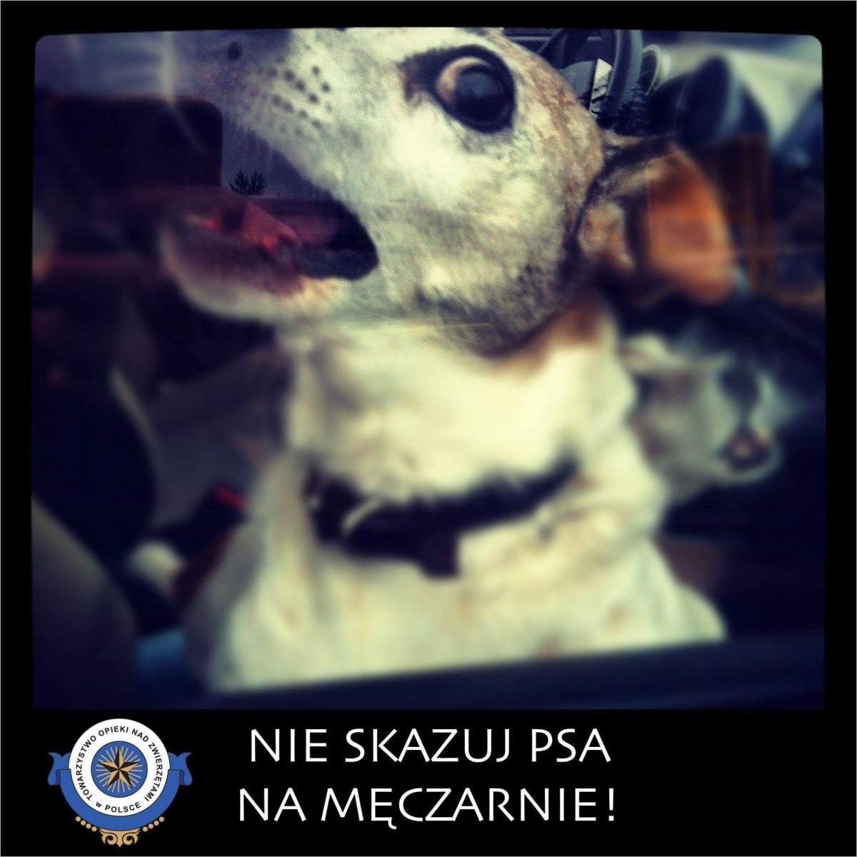 Publikujemy apel Towarzystwa Opieki nad Zwierzętami w Polsce, w którym zachęcamy Was do wzmożonej troski skierowanej w stronę Waszych ulubieńców!