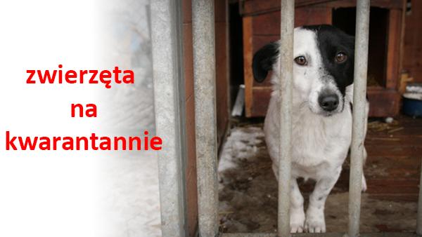 zwierzęta na kawarantannie