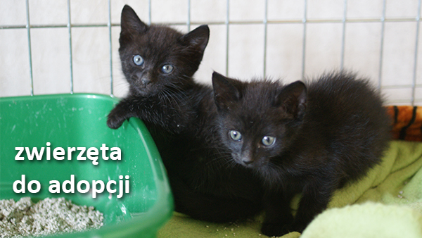 zwierzęta do adopcji